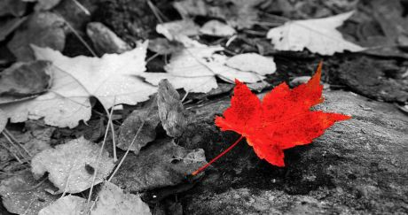 forest-floor-maple-leaf-adam-pender