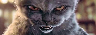 Stress makes me feel like this angry cat sometimes...